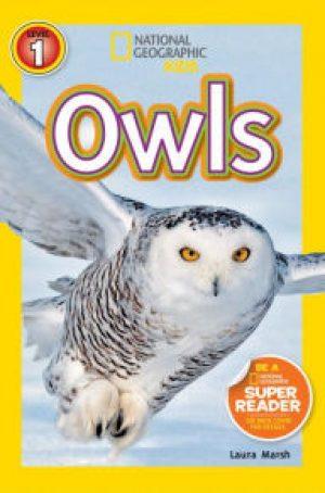 owls-jpg